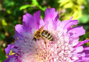 bee_flower