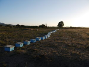Bee hives in Tigaki on the Greek island of Kos.