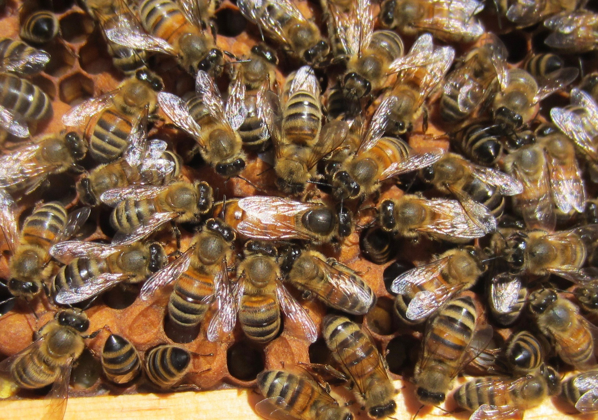 Bees are well organized